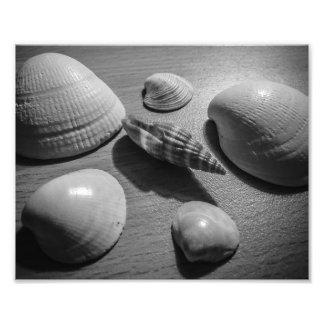Seashells Photo Art