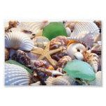 Seashells Photo Prints