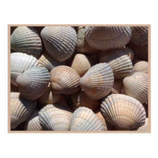 Seashells Postcard