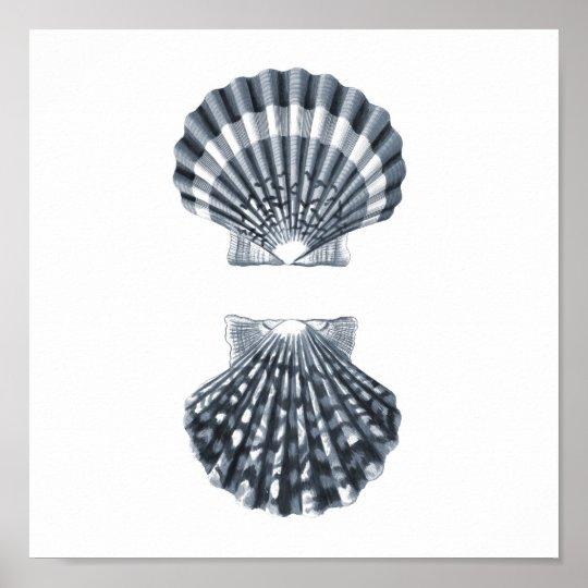 Seashells Sealife Group12A print#4 beach decor art