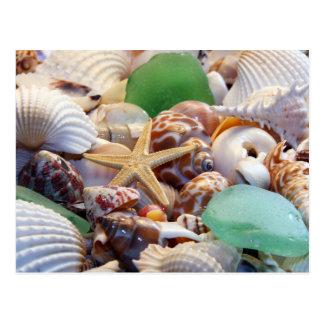 Seashells Starfish & Beach Glass Postcard