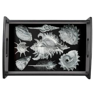 Seashells Tray 1