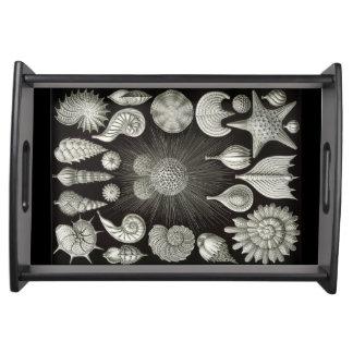 Seashells Tray 2