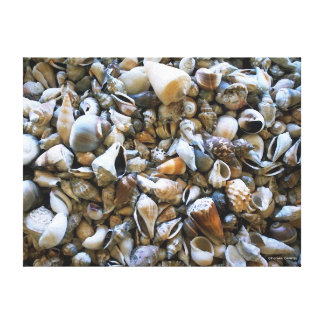 """Seashells"" Wrapped Canvas Print"