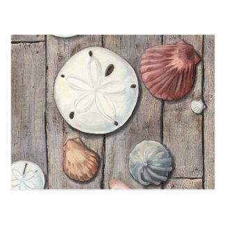 Seashore Treasures Postcard