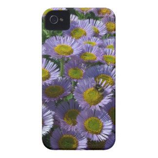 Seaside Daisies iPhone 4 Cases