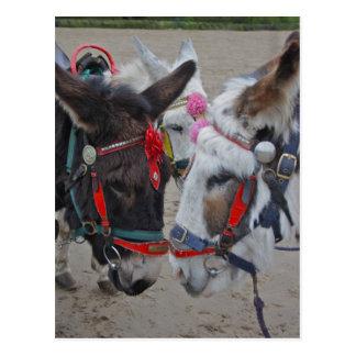 Seaside Donkeys Post Card