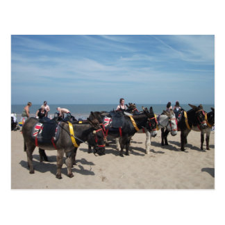 seaside donkeys postcard