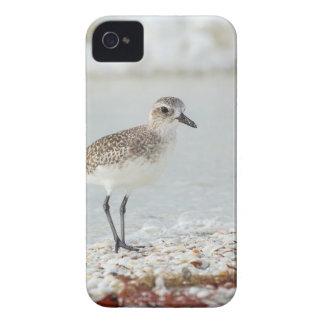 Seaside Plover iPhone 4 Case