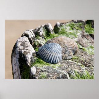 Seaside views - shells poster