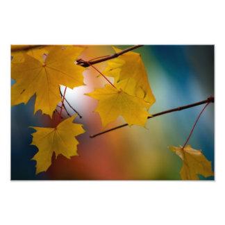 Seasons Change Photo Print