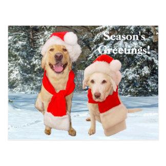 Season's Greetings! Postcard