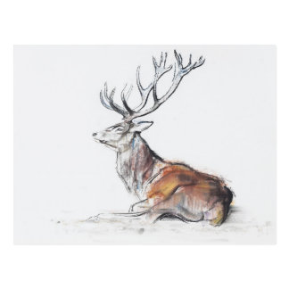 Seated Stag 2006 Postcard