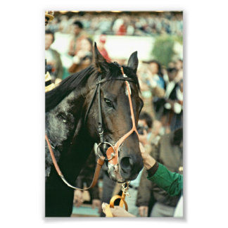 Seattle Slew Thoroughbred Racehorse 1978 Art Photo