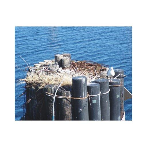 Seattle – Washington – Birds Nesting on a Piling Canvas Print