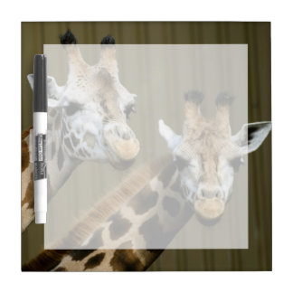 Seattle, Washington. Two giraffes Dry Erase Board