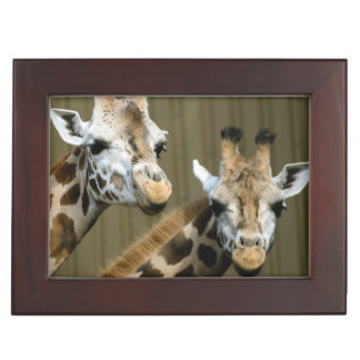 Seattle, Washington. Two giraffes Keepsake Box