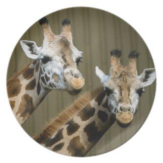 Seattle, Washington. Two giraffes Plate