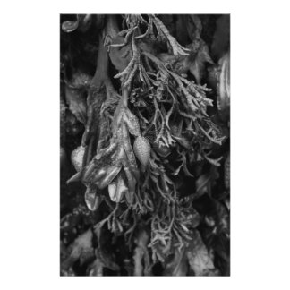 Seaweed in Black and White Flyers