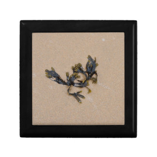 Seaweed on a Sandy Beach Cornwall England Small Square Gift Box