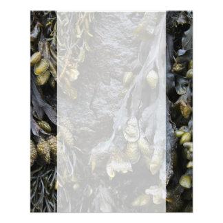 Seaweed Picture Custom Flyer