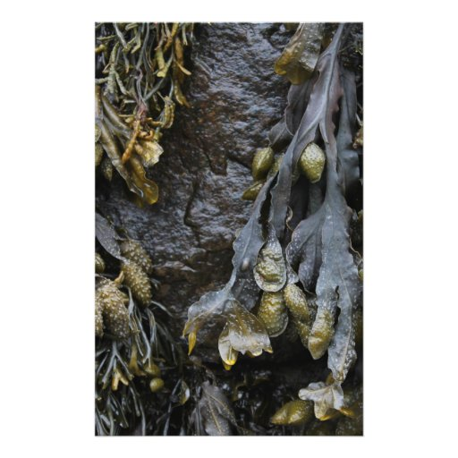Seaweed Picture. Full Color Flyer