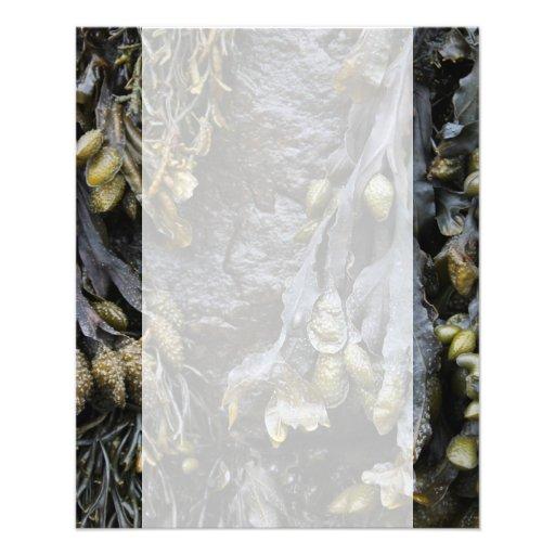 Seaweed Picture. Custom Flyer