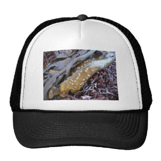 Seaweeds 1 cap