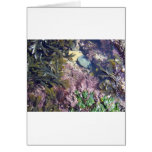 Seaweeds in a pool cards