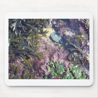 Seaweeds in a pool mouse mat