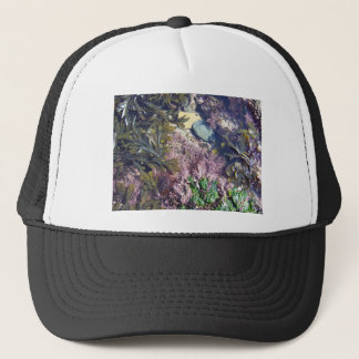 Seaweeds in a pool trucker hat