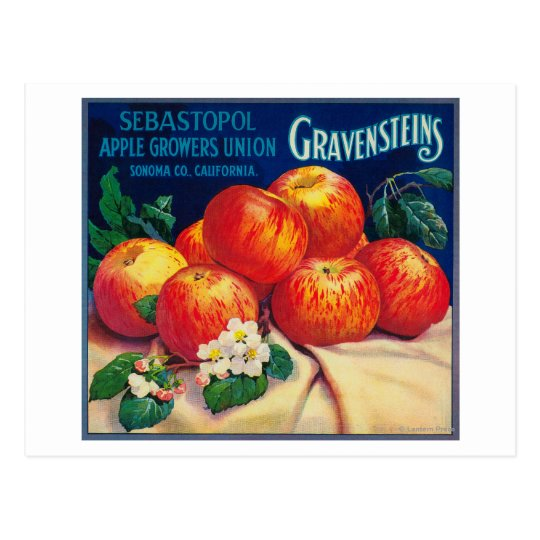 Sebastopol Gravensteins Apple LabelSonoma, CA Postcard