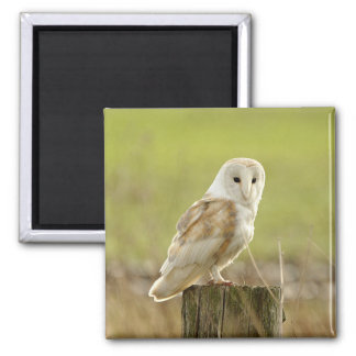 Secret Owl Bird Animal Peace Love Destiny Magnet