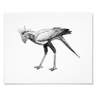 Secretary Bird Art Photograph