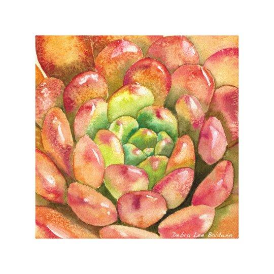 Sedeveria 'Pink Ruby' by Debra Lee Baldwin Canvas