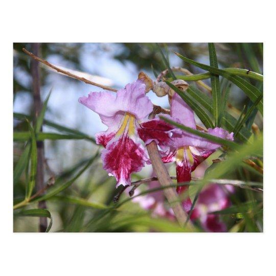Sedona Flowers Postcard