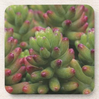 Sedum plant, Arizona-Sonora Desert Museum, Beverage Coasters