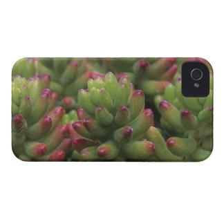 Sedum plant, Arizona-Sonora Desert Museum, iPhone 4 Case