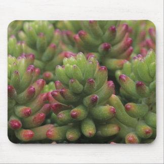 Sedum plant, Arizona-Sonora Desert Museum, Mouse Pad