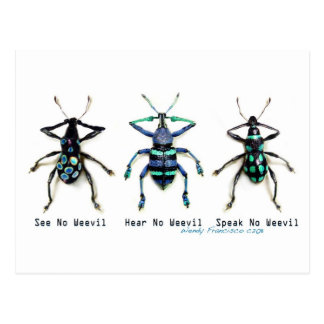 See No Weevil! Postcard