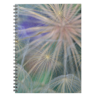Seed Head Design | Gennesse, Idaho Notebook