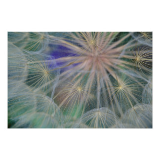 Seed Head Design | Gennesse, Idaho Poster