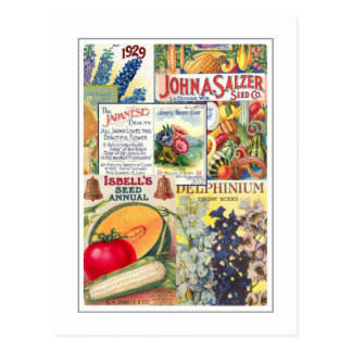 Seed Packets Postcard