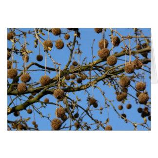 Seed Pods - London Plane Tree Card