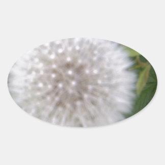 Seeded Dandelion head Oval Sticker