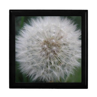 Seeding Dandelion Flower Gift Box