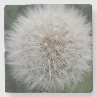 Seeding Dandelion Flower Stone Coaster