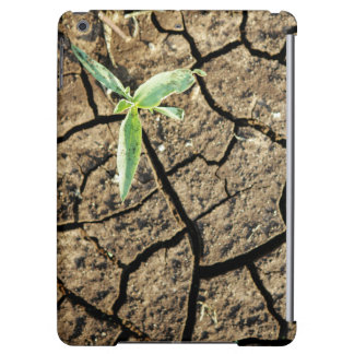 Seedling In Cracked Earth