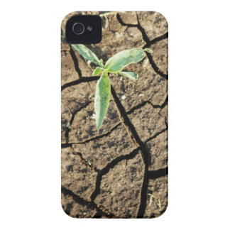 Seedling In Cracked Earth iPhone 4 Case-Mate Case