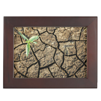 Seedling In Cracked Earth Keepsake Box